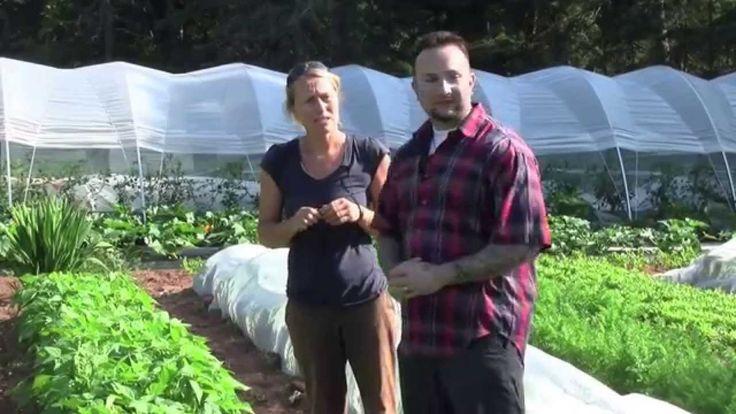 Just A Little Farm - Bonshaw PEI