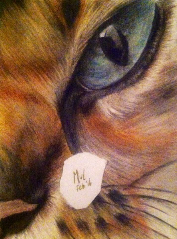 Pastel drawing Tigereye   • mariellevanleeuwen@live.nl • AR•T•INT • www.facebook.com/artintx • instagram @artint