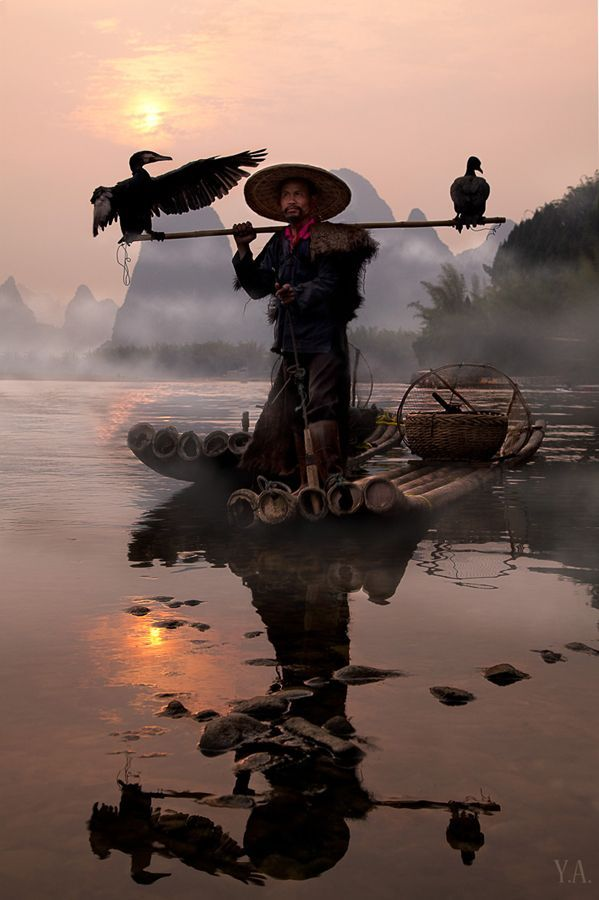 Cormorant fishing is a traditional fishing method in which fishermen use trained cormorants to fish in rivers.
