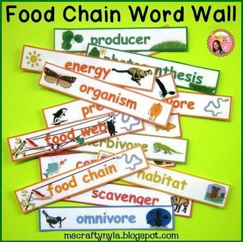 Food Chain and Food Web Vocabulary Words - #Literacy Station for #Science $