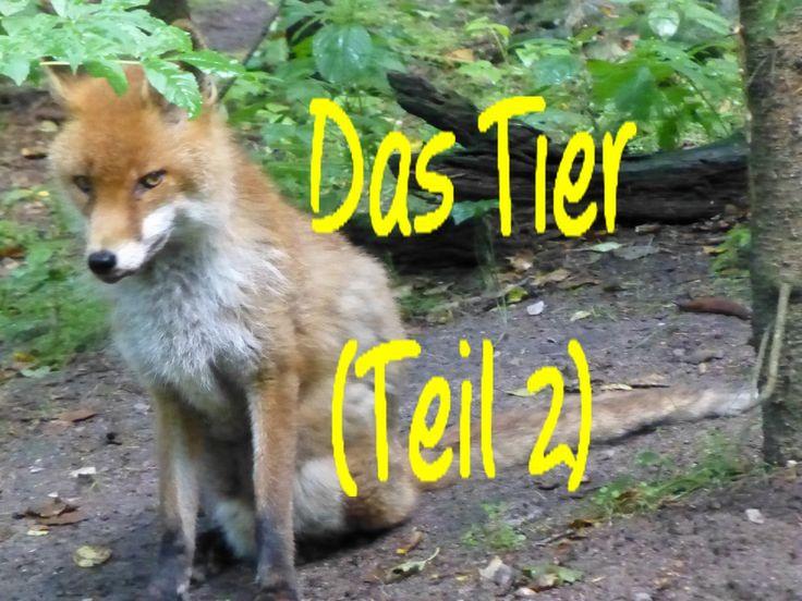 Learn German: Das Tier (Teil 2)
