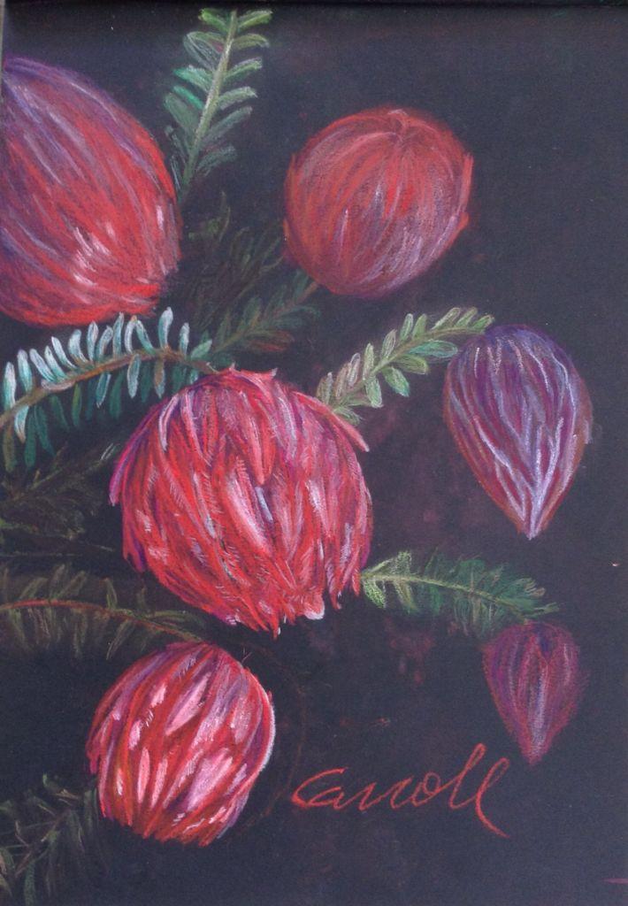 Darwinia, native Australian flower done in Derwent inktense