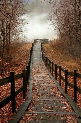 Ponte staccionata piena di foglie cadute dagli alberi