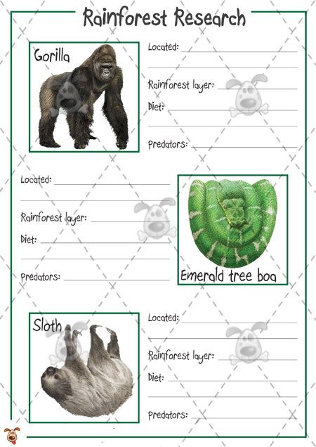 Teacher's Pet Activities & Games » Rainforest Animal Research (colour) » EYFS, KS1, KS2 classroom activity and game resources » A Sparklebox alternative