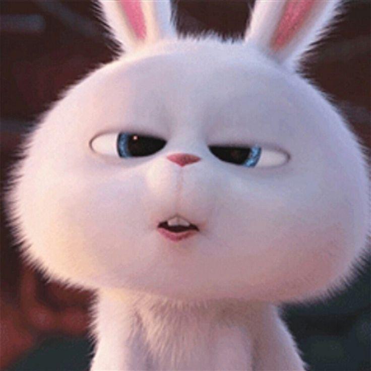 Snowball Cute Is Just My Cover By Secrelifeofpets Bunny Wallpaper Rabbit Wallpaper Cute Disney Wallpaper