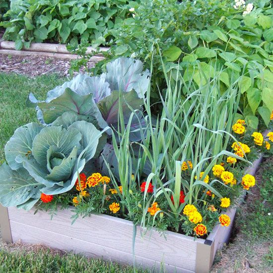 Here are the steps you should take into consideration when planting vegetables.