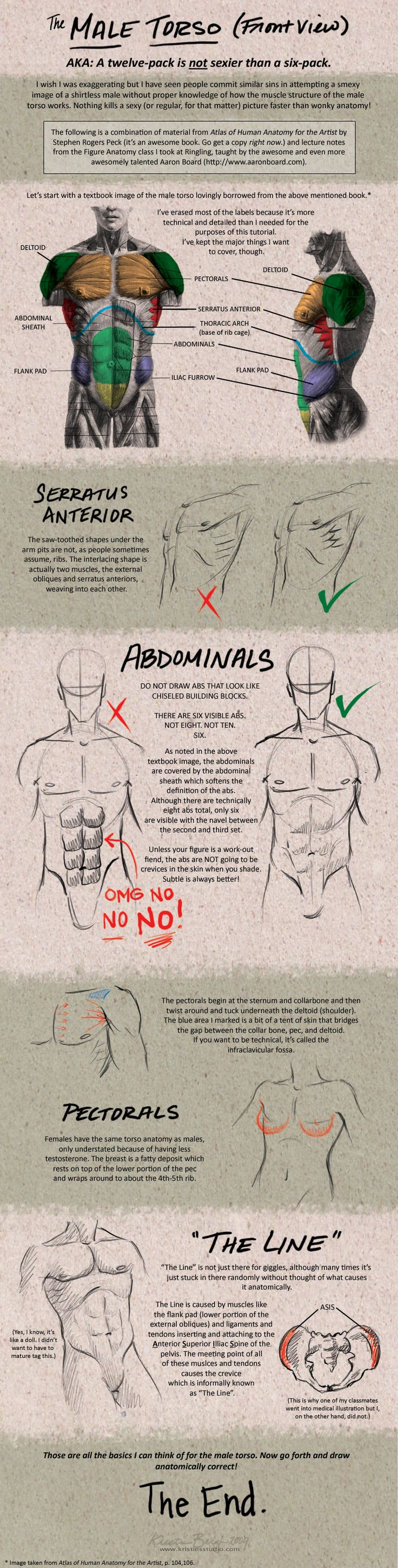 Tutorial: Male Torso - Front by KrisCynical.deviantart.com