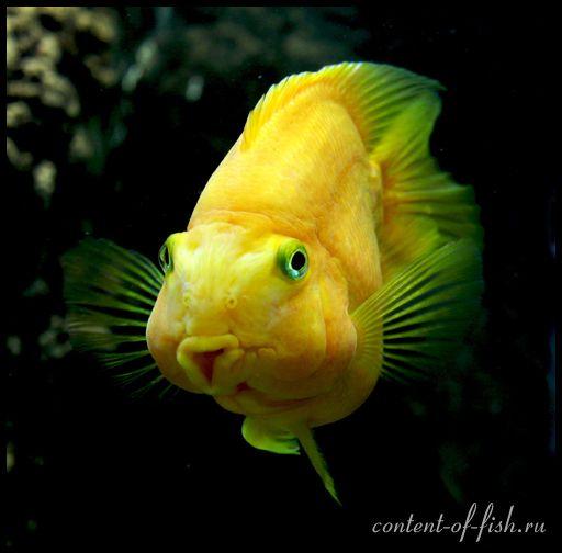 смешная-рыба9027.jpg (512×504)