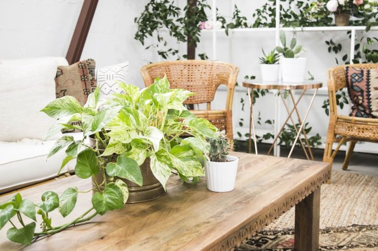 Decorative Greenery within Bright Neutral Lounge | Bloguettes Blogging Workshop: Austin via Birch & Brass Vintage Rentals for Weddings and Special Events in Austin, Texas
