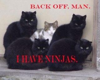 Ninja screensaver kittens masturbate