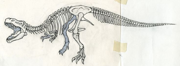 trex skeleton, I really like the flow in this picture and how the pose is really dynamic. I probably wouldn't it to have the tongue but this pose and configuration is really nice.