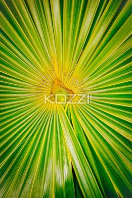 bright center fern - A strong focal point of ferns with bright, vivid greens and yellows and leading lines towards the upside down heart-shaped center.