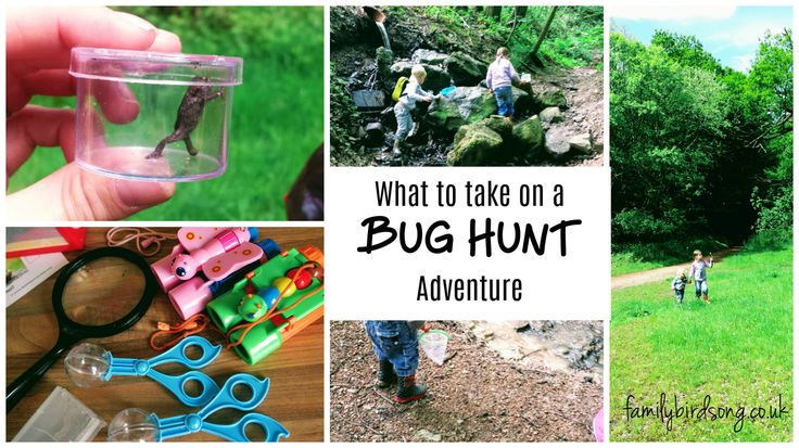 How to plan and carry out the best bug hunt ever!