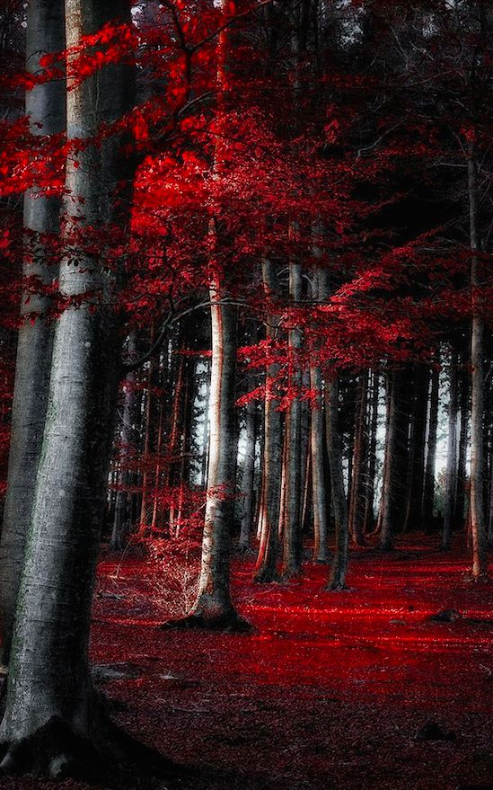 Autumn forest in Germany • digital photography: Dorothe Domke