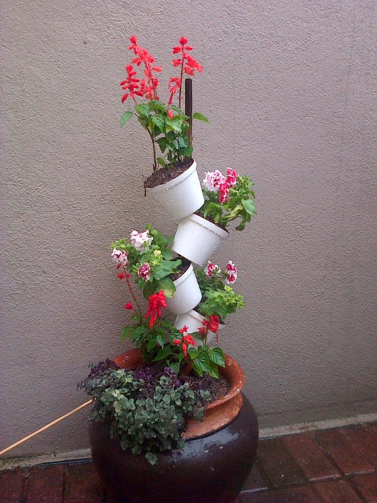 Little verticle garden ... got the idea on Pinterest