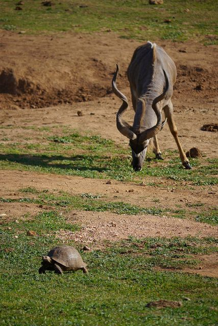Kudu and Turtoise