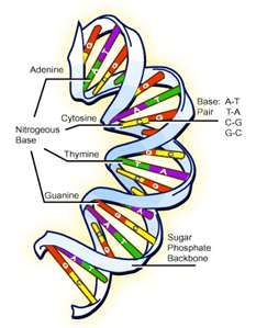 such a beautiful sight. I love the DNA double helix <3