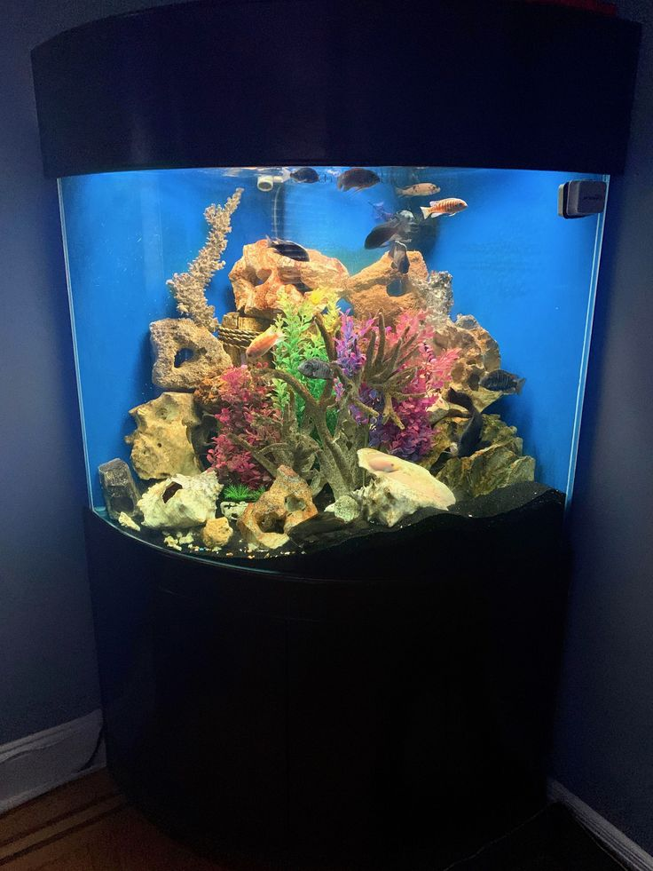 beautiful aquarium setup - glass fish tanks, glass ...