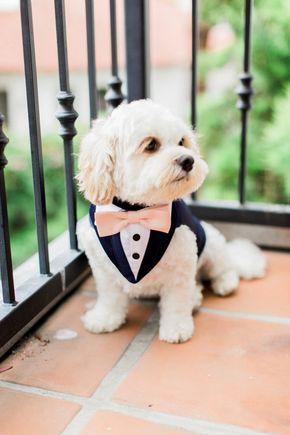 Spoilt podrido mascotas Rosa peluche de dama de honor novia boda Bandana Perro Cachorro Cerise