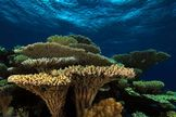 Great Barrier Reef: Facts, Location & Animals   LiveScience
