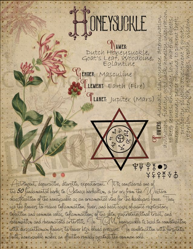 honeysuckle   nature magick   Book of shadows, Witch herbs