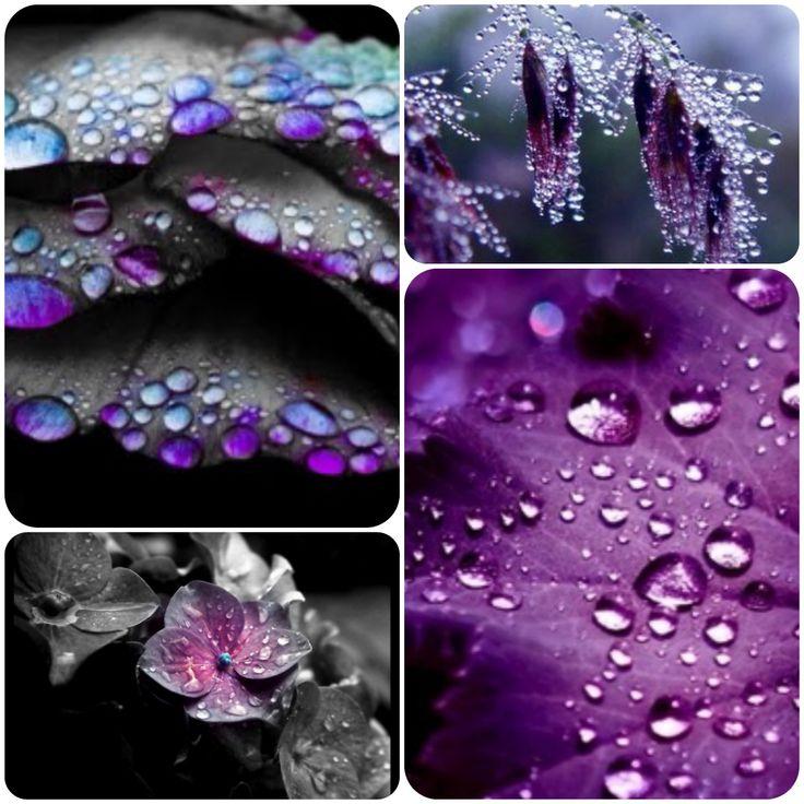 O #ploaie de #culoare #purple #violet #insoiratie