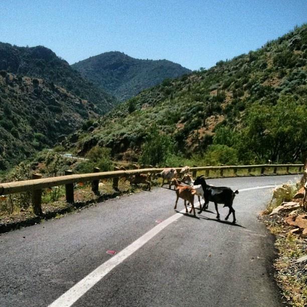Caleu - Caleu es una localidad chilena ubicada a 68 kilómetros al noroeste de Santiago de Chile, perteneciente a la municipalidad de Til Til, Región Metropolitana de Santiago