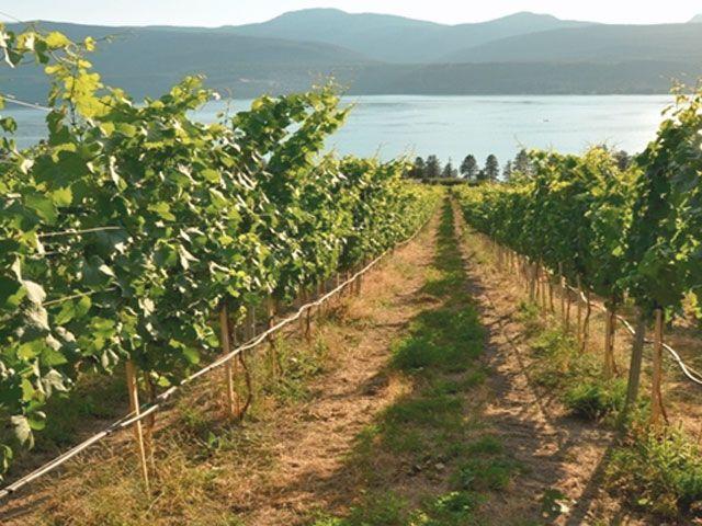 Kelowna wines and vineyards