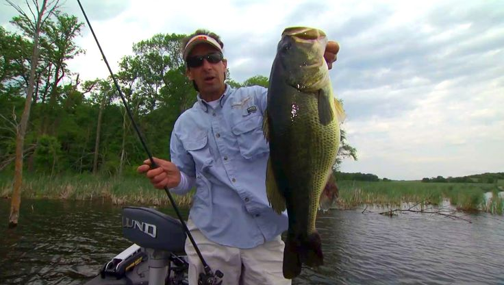 1000 ideas about fishing for bass on pinterest bass for Bass fishing for beginners