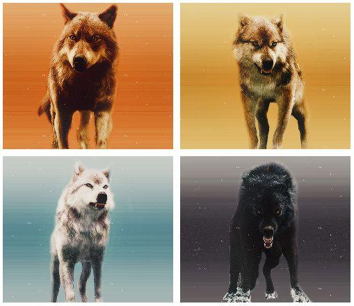 Wolves - Jacob, Seth, Leah, and Sam