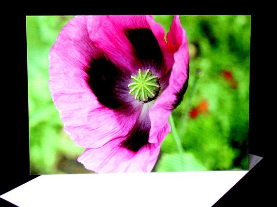 Purple Poppy Flower A6 Photo Card Blank by PforPoppy on Etsy, €2.75