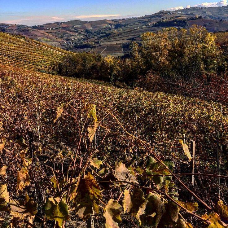 #barolo #nebbiolovineyard #vineyard #fall #italianexellence #langhe #weekend #greatestwine