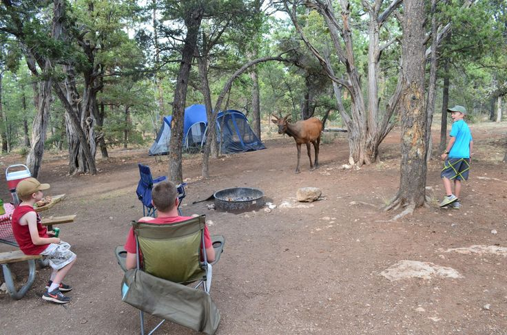 Mather Campground - UPDATED 2018 Reviews (Grand Canyon National Park, AZ) - TripAdvisor