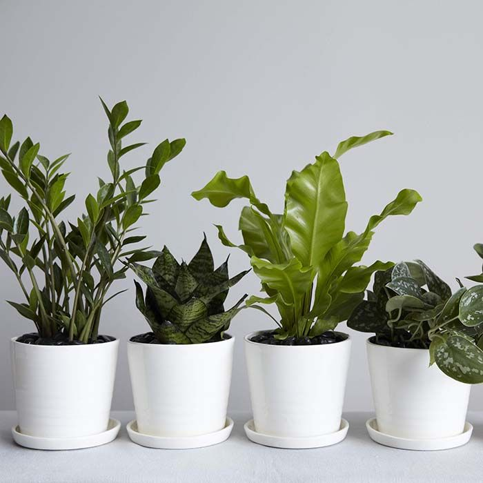 119 best Indoor Plants images on Pinterest   Gardening, Plants and ...
