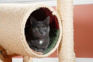 5 Tips For Creating Cat Friendly Homes #cats #human cat bond #cat friendly homes