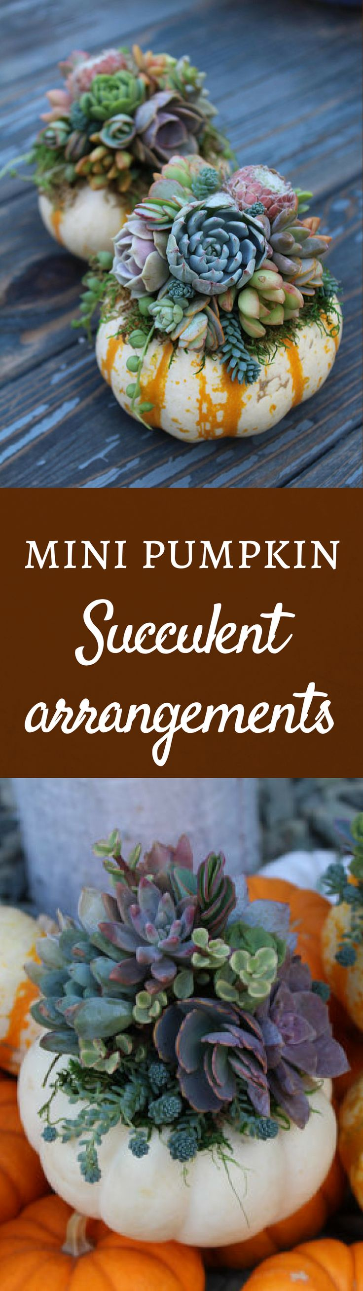 Decorate for fall this year with something a little different, a pumpkin planter filled with live succulent plants!  Once the pumpkin is spent, re-plant the succulents into another container.  A fun and pretty alternative for your holiday centerpiece, man