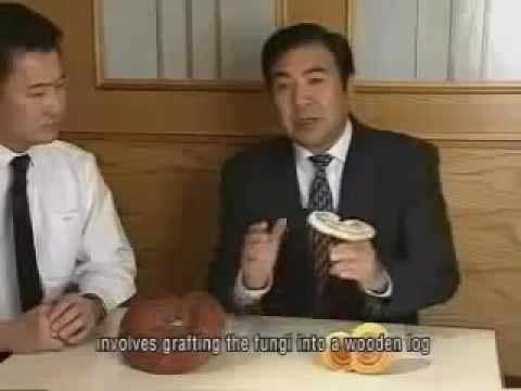 Mushroom Magic: this is Ganoderma Lucidum (Reishi)