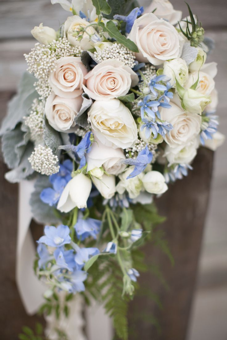Ivory, white and baby blue cascade wedding bouquet. Garden roses, roses, ranunculus, delphinium, tweedia, riceflower, dusty miller and ferns. Almond-Orchard, Diana McGregor Photography