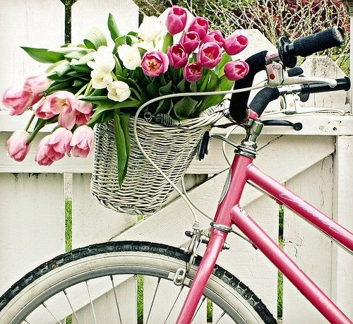 beautiful: Bicycles, Pink Bike, Bikes, Baskets, Tulips, Flowers, Spring