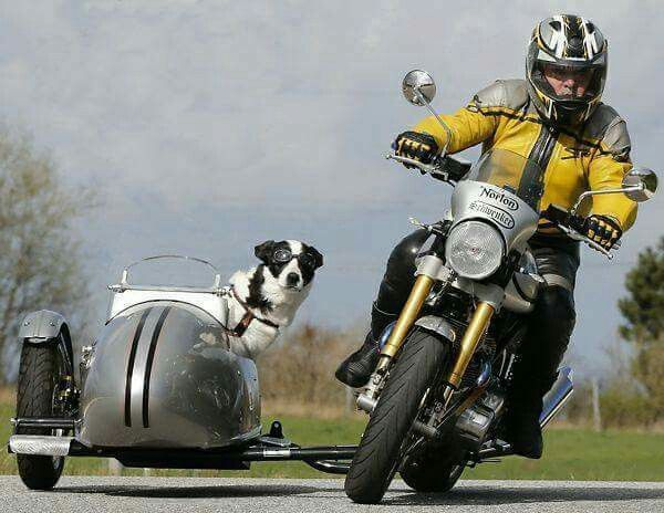 Best 25 Sidecar Ideas On Pinterest Motorcycle With