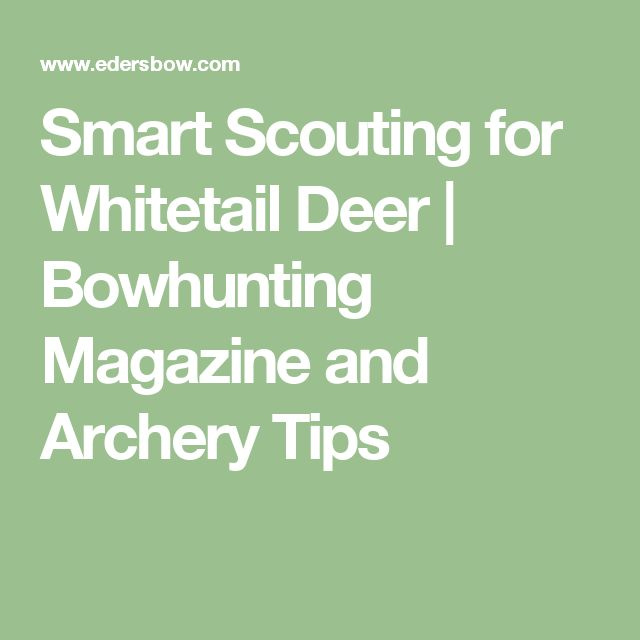 Smart Scouting for Whitetail Deer | Bowhunting Magazine and Archery Tips