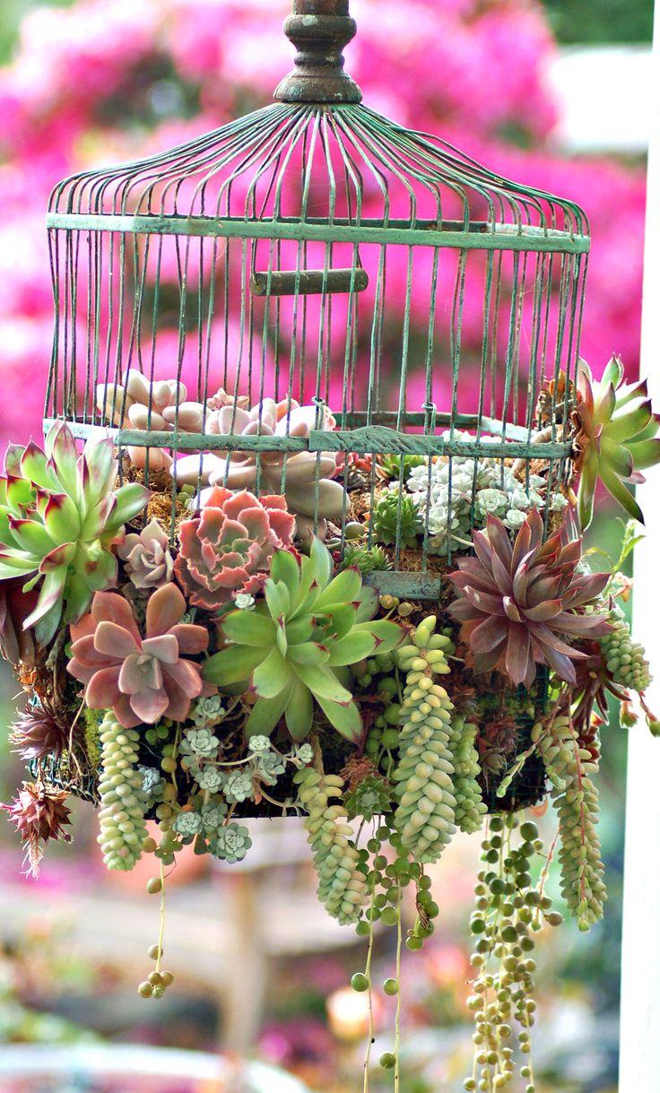 Birdcage succulents: What clever idea...