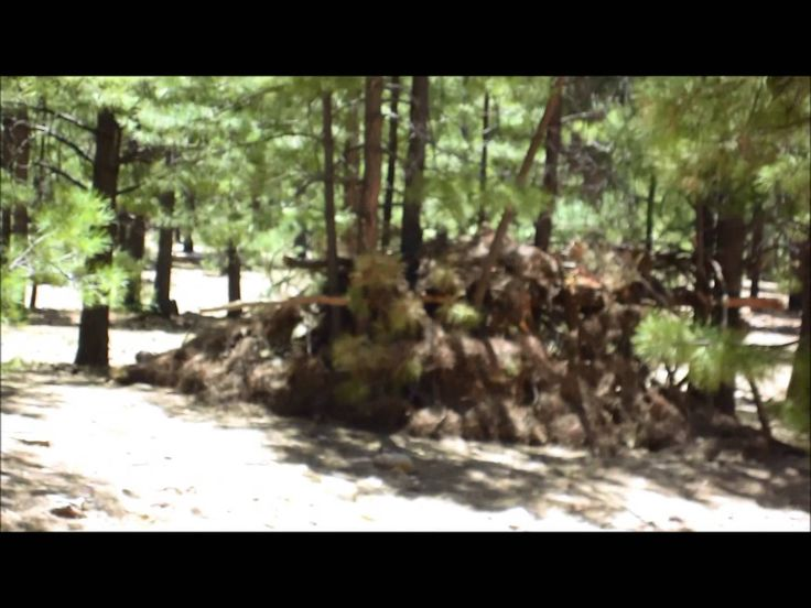 Bear or BigFoot in Weird Forest Structure