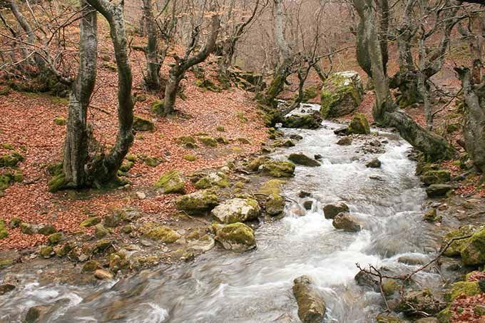 """Faedo de Ciñera, León. Con un haya de 500 años y el título de """"El Bosque Mejor cuidado de España"""", el Faedo de Ciñera es un lugar especial. Este hayedo situado en Ciñera de Gordón (en la Montaña Central Leonesa) es un pequeño oasis tupido en el que los relojes se han parado. Acércate para experimentar la paz y la calma entre árboles y junto al arroyo homónimo. Y, por supuesto, no te pierdas a Fagus, uno de los árboles más impresionantes que verás nunca."""