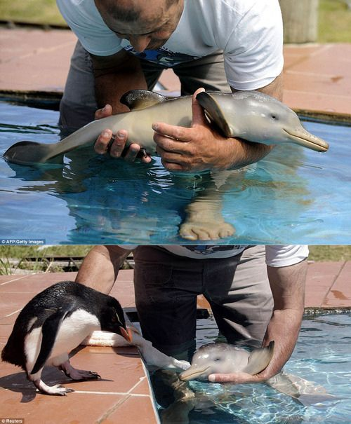 baby penguin meets baby dolphin...aw!
