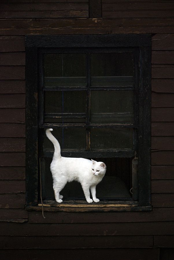 Contrast: Black Window, Black Doors, Black And White, Cute Cat, Cute Pet, Black White, Photo, Snow White, White Cat