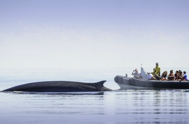 Top 5 Whale-Watching Spots in New England and Atlantic Canada