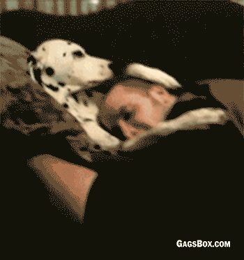 Petting Role Reversal