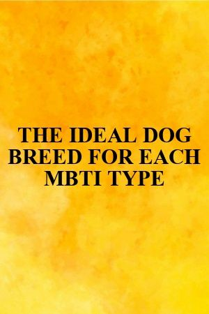 THE IDEAL DOG BREED FOR EACH MBTI TYPE