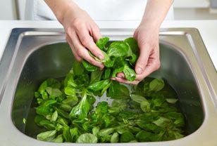 Sein feiner, nussiger Geschmack macht Feldsalat so beliebt. Die saftig-grünen Blättchen sind empfindlich und oft sandig. Vor dem Verzehr sollten Sie deshalb den Feldsalat putzen. So geht's!